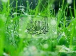 vista-wallz-01