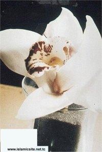 Nama ALLAH pada kelopak Bunga