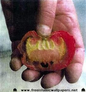ALLAH-name on tomato
