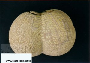 Asma ALLAH Subhana wa Ta'ala pada buah
