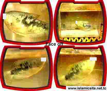 kaligrafi arab nama ALLAH pada tubuh Ikan