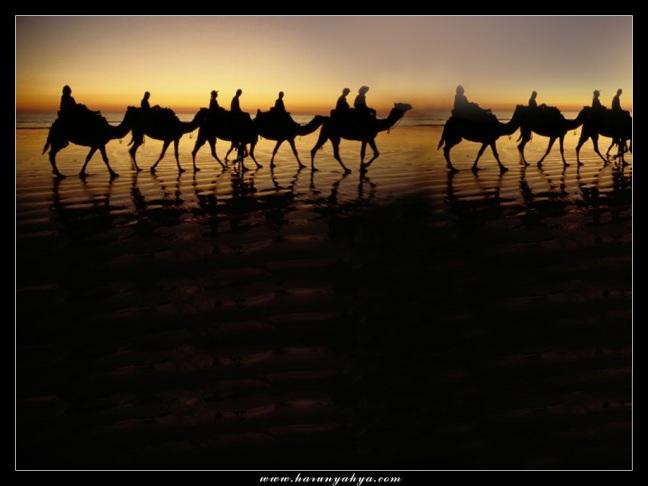 Arabic Camel